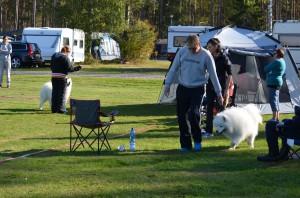Jalostustarkastus 12.9.2015 Kauhajoki